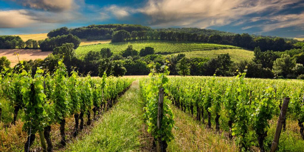 Бордо – Легенда Французского Виноделия