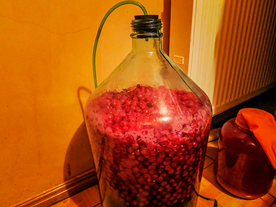 вино из вишни подготовка к брожению