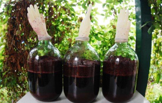 домашнее вино из винограда брожение