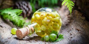 Готовим вино из крыжовника в домашних условиях — простой рецепт