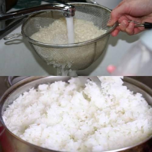 подготовка закваски кодзи для домашнего сакэ
