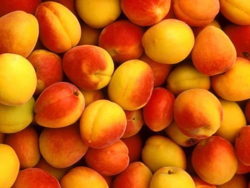 абрикосы для наливки подготовка