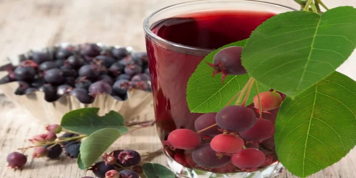 вино из ирги рецепт в домашних условиях