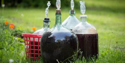 первичное брожение вина из терна