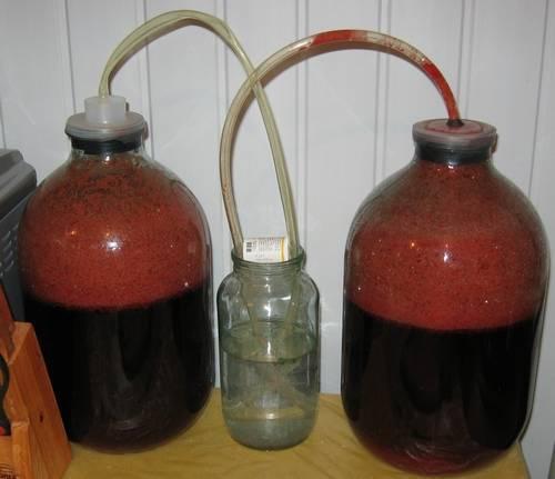 брожение вина из терна