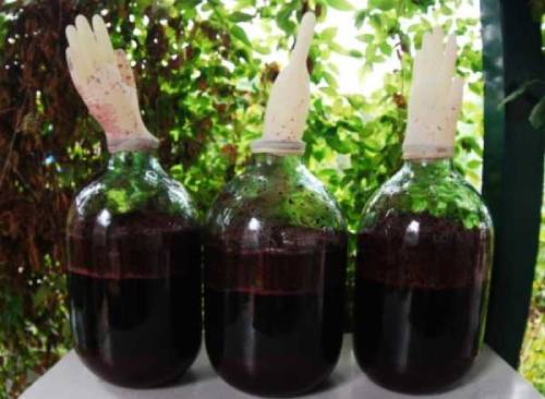 снятие с осадка тернового вина