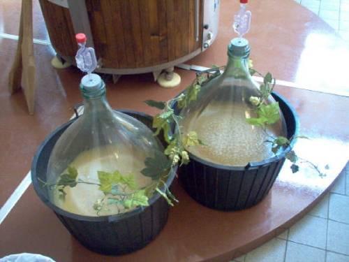 брага из березового сока брожение